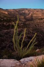 Cactus Overlooking Desert Canyons