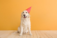 Cute Dog In Party Hat On Color...