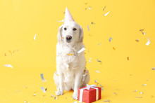 Cute Dog In Party Hat And With...