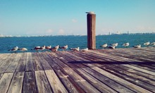 Seagulls On Pier Over Sea