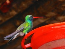 Low Angle View Of Hummingbird On Feeder