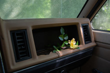 Yellow Rose In Pickup Truck