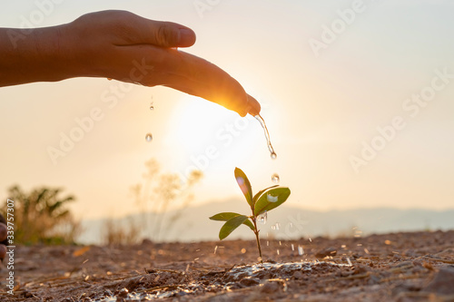Hand nurturing and watering young baby plants growing in germination sequence on Canvas Print