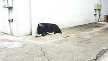 Black Stray Dog Resting Against White Wall