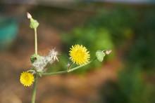 Close-up Macro Of Yellow Flowe...