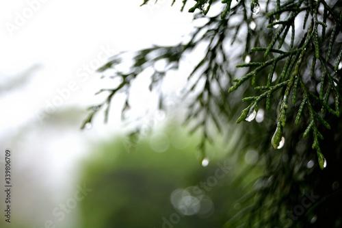 Close-up Of Dew Drops On Leaf Fotobehang