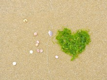 Directly Above View Of Seashells And Heart Shape Seaweed On Sand At Beach