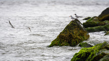 Birds On Rocks Covered With Se...