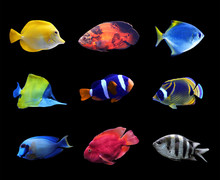 Set Of Different Bright Tropical Fishes On Black Background