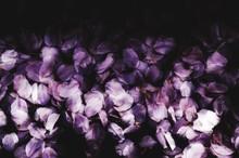 Close-up Of Purple Flowers At Night