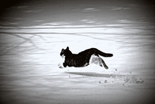 Cat Running On Snow Covered Fi...