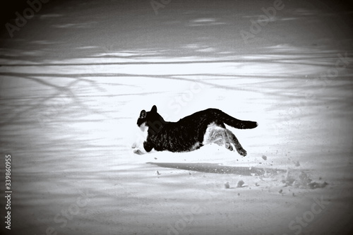 Cat Running On Snow Covered Field - fototapety na wymiar