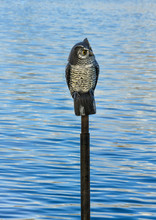 Artificial Owl Mounted On A Pole In Ta River To Scare Off Wild Birds.