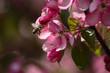 wiosna pszczoła
