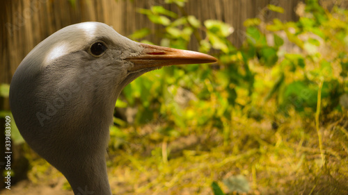 Głowa ptaka na tle natury, Bird's head against the backdrop of nature - fototapety na wymiar