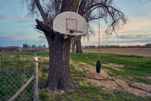Low Angle View Of Basketball Hoop And Tire Swing On Bare Tree