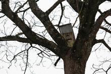 Bird House On Tree Betweet Thi...