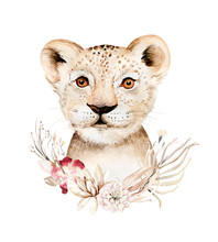 Africa Watercolor Savanna Lion, Animal Illustration. African Safari Wild Cat Cute Exotic Animals Face Portrait Character. Isolated On White Poster Design