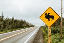 Beware Of Moose Road Sign In C...