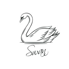 Swans Outline Icon.