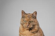 Closeup Shot Of A Grumpy Cat L...
