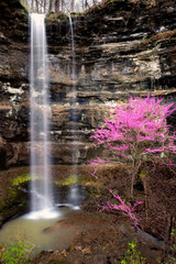 Panel Szklany Drzewa Redbud tree plus waterfall