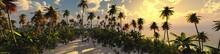 Palm Trees On Sunset Backgroun...