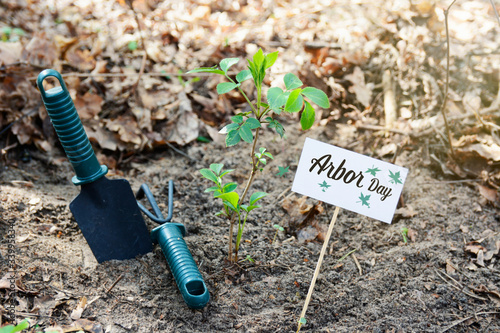 Fotografie, Tablou Arbor day - planting a young seedling tree and garden supplies tools