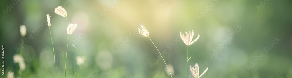 Fototapeta Beautiful nature view of flower on blurred background in garden with copy space using as summer background natural flora plants landscape, ecology, fresh cover page concept.