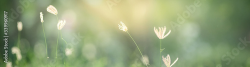 Cuadros en Lienzo Beautiful nature view of flower on blurred background in garden with copy space using as summer background natural flora plants landscape, ecology, fresh cover page concept