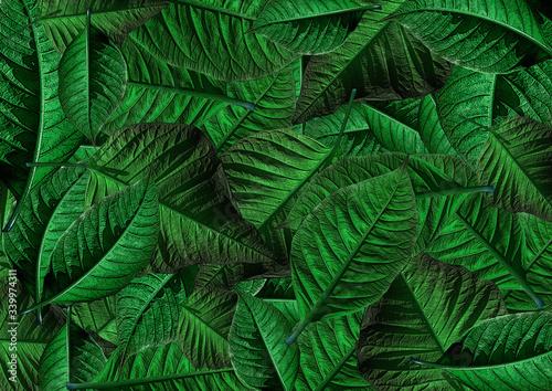 Photo Modello di sfondo verde di stella di Natale.