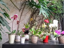 Various Potted Flowering Plants On Table