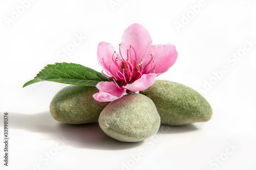 Fototapeta Young green almonds with its leaf and blossoming flower on a white obraz na płótnie