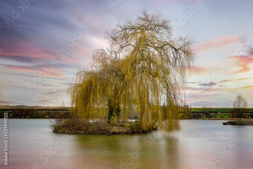 Photo Saule Pleureur sur Lac