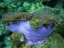 Close Up Of Sea Anemone