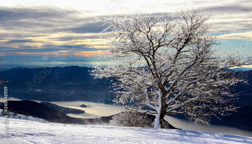 Snow Covered Bare Tree At Mottarone Against Cloudy Sky Canvas Print