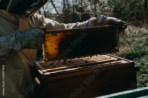Photo The beekeeper holds a honey cell with bees in his hands