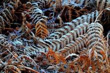 Full Frame Shot Of Frosty Ferns
