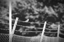 Low Angle View Of Bird On Barbed Wire