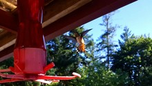 Low Angle View Of Hummingbird Hovering By Bird Feeder