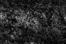 Full Frame Shot Of Dry Grassy ...