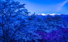 Snowy Mountains And Blue Cherr...