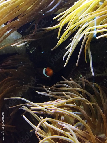 Fotografia, Obraz High Angle View Of Clownfish Swimming In River