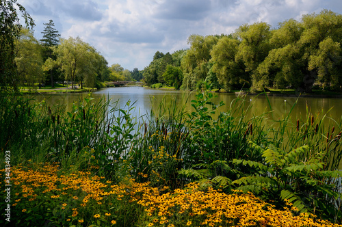 Black Eyed Susans Cattails and a footbridge at Victoria Park Lake in Kitchener O Tablou Canvas