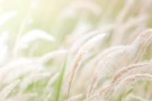 Summer Background, Dry Grass F...