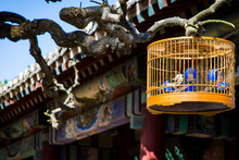 Birdcage Hanging On Branches Outside The Red Wall Of The Forbidden City Of Beijing