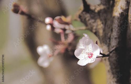 Fototapeta Close-up Of Pink Flowers obraz na płótnie