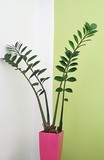 Potted Plant By Wall At Home