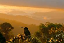 Hummingbird In Landscape. Suns...