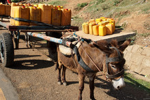 Donkey Cart With Yellow Water Canisters